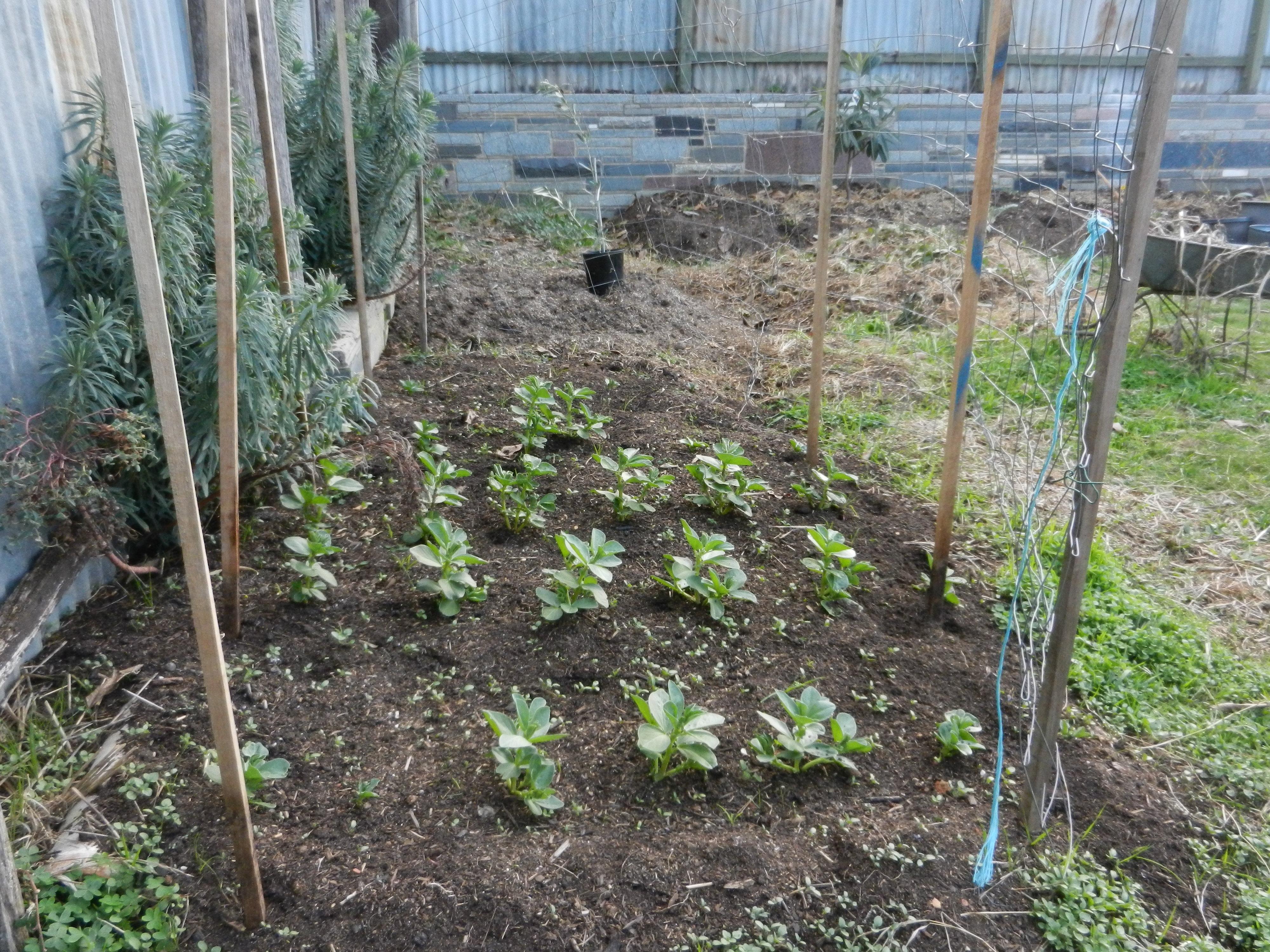 winter august in the garden bluetongue greenthumb