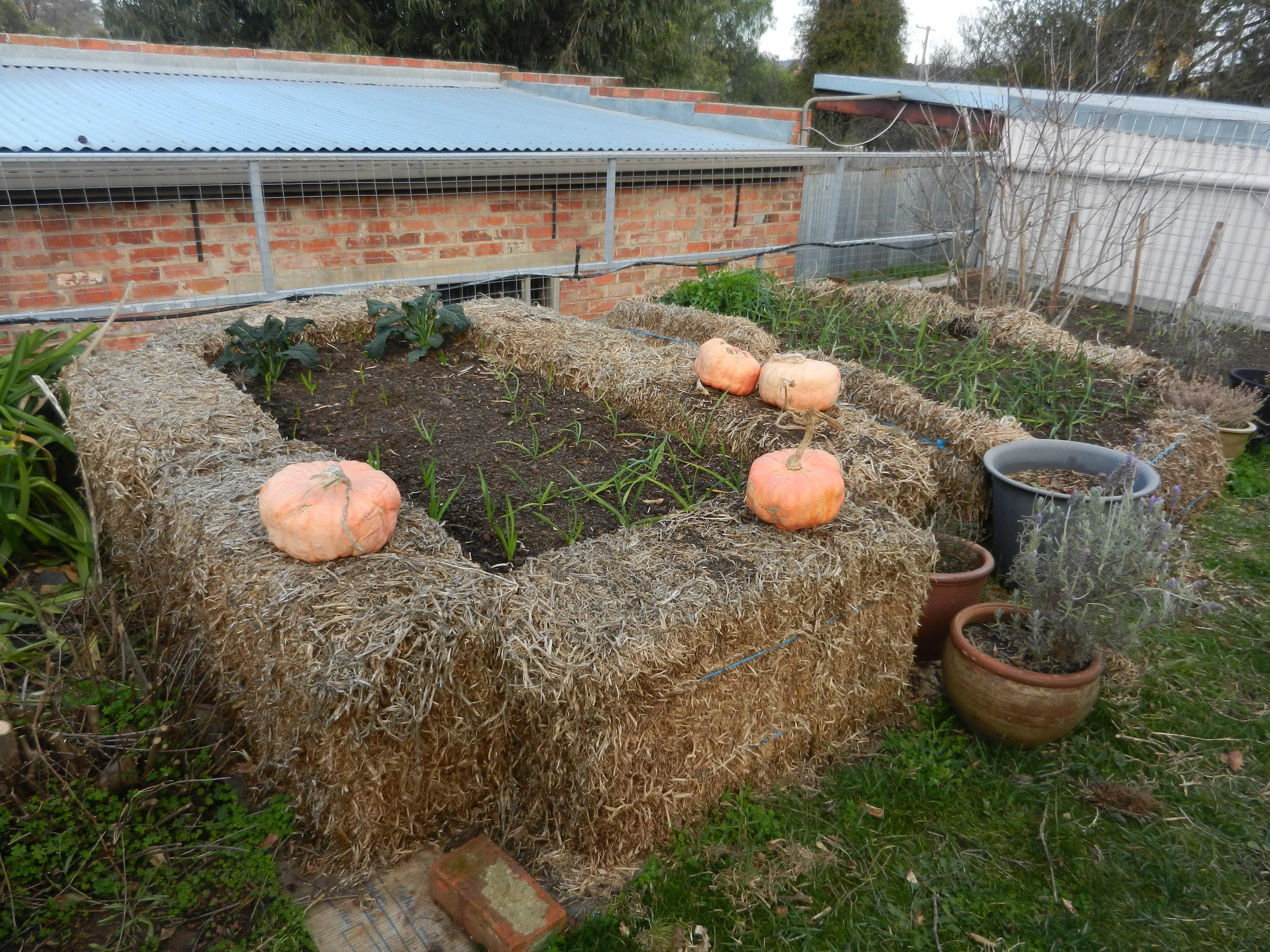 Build a No-Dig Garden Bed | bluetongue greenthumb